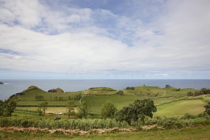 Paesaggio rurale di verde della linea costiera delle Azzorre nell'isola del Flores Portuga immagine stock libera da diritti