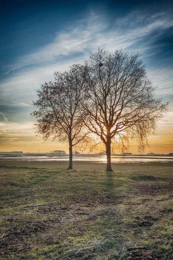 Paesaggio rurale drammaticamente colorato con un sil sfrondato di due alberi fotografia stock