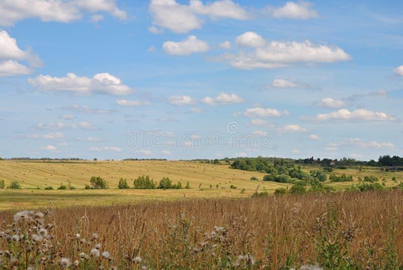 Paesaggio rurale meraviglioso di estate: cielo blu luminoso e giacimenti infradiciati del sole di estate, Russia fotografie stock libere da diritti