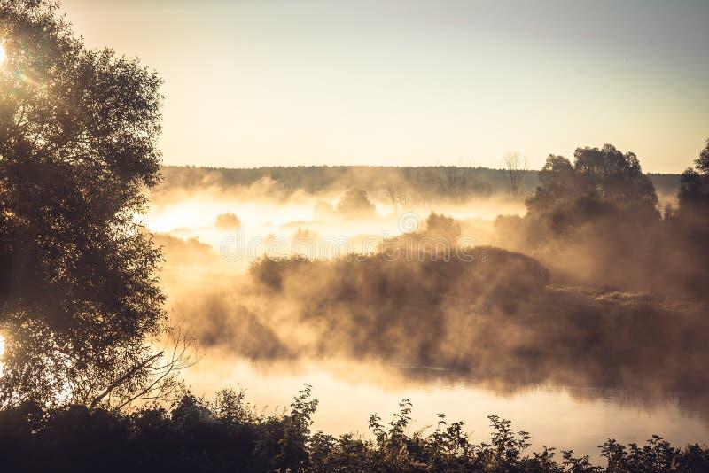 Paesaggio rurale nebbioso durante l'ora dorata alla sponda del fiume nel primo mattino immagine stock libera da diritti