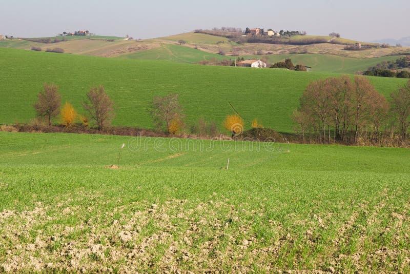 Paesaggio rurale tipico della regione della Marche fotografia stock