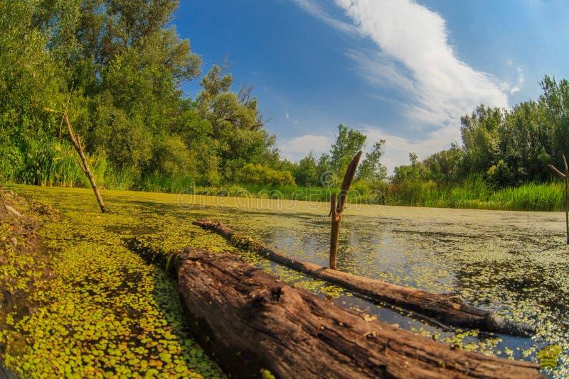 Paesaggio russo del cielo della smagliatura della foresta della palude della lemma immagini stock