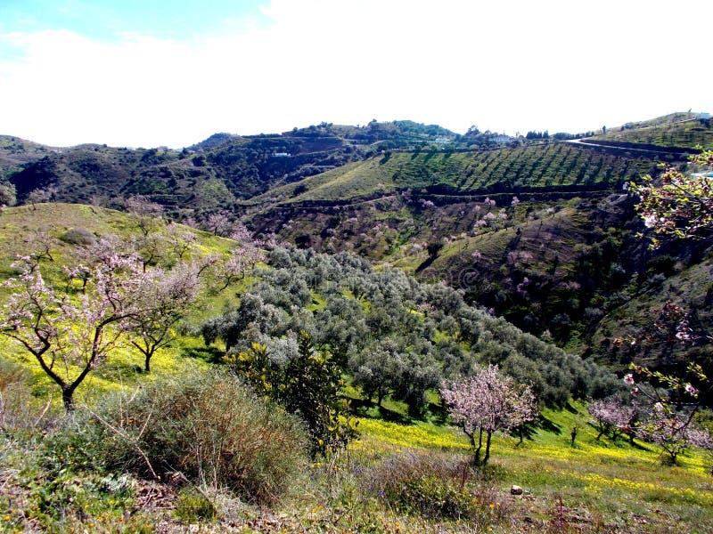 Paesaggio sbocciante del mandorlo in Spagna fotografie stock libere da diritti