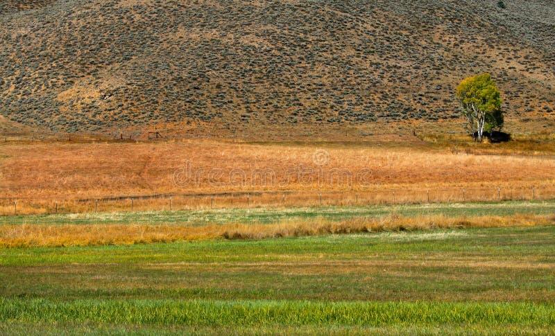 Paesaggio scenico dell'azienda agricola immagini stock libere da diritti