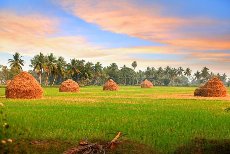 Paesaggio scenico dell'azienda agricola in India fotografie stock