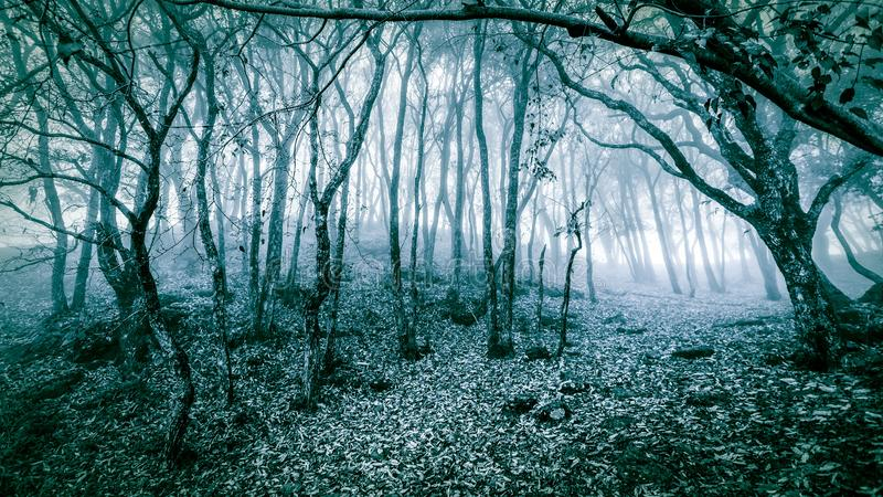 Paesaggio scenico di inverno della foresta fredda fotografie stock