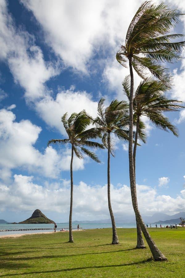 Paesaggio scenico Hawai del parco regionale di Kualoa immagini stock libere da diritti