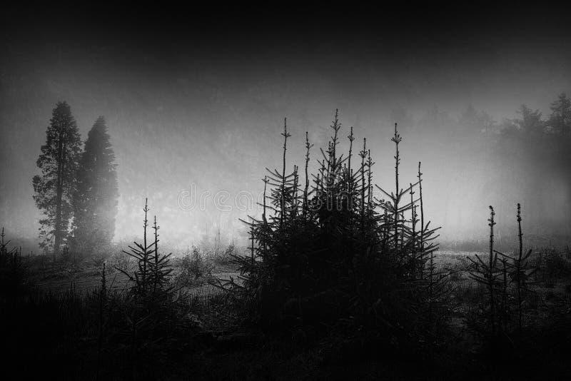 Paesaggio scuro e spaventoso immagine stock