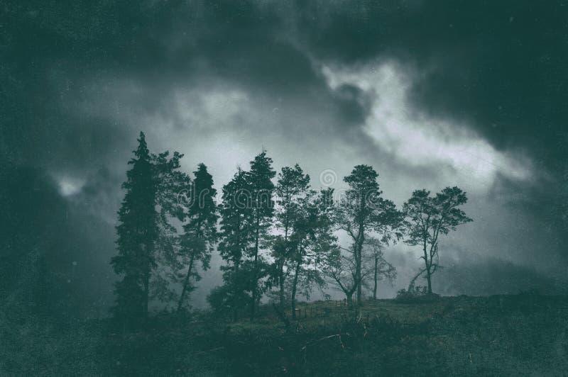 Paesaggio scuro lunatico degli alberi immagini stock libere da diritti