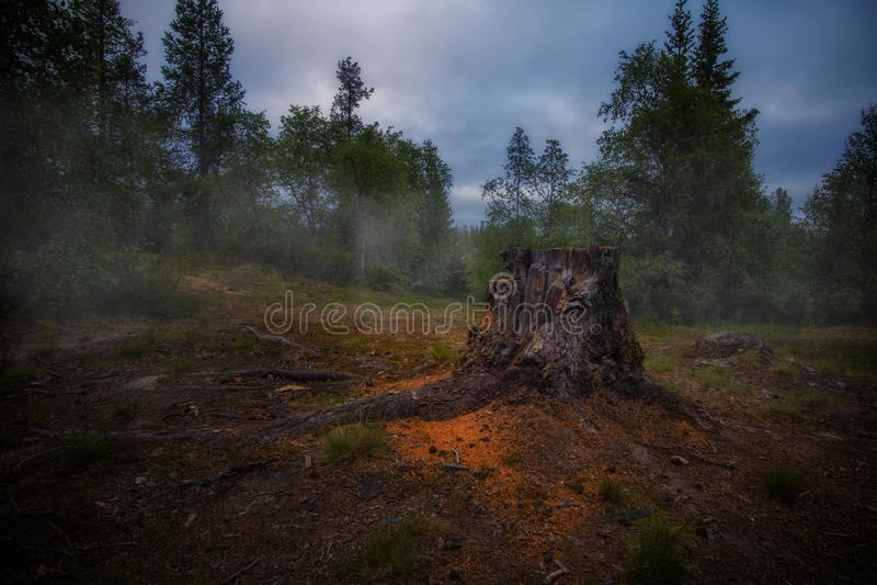 Paesaggio scuro mistico con l'albero e la nebbia segati immagini stock
