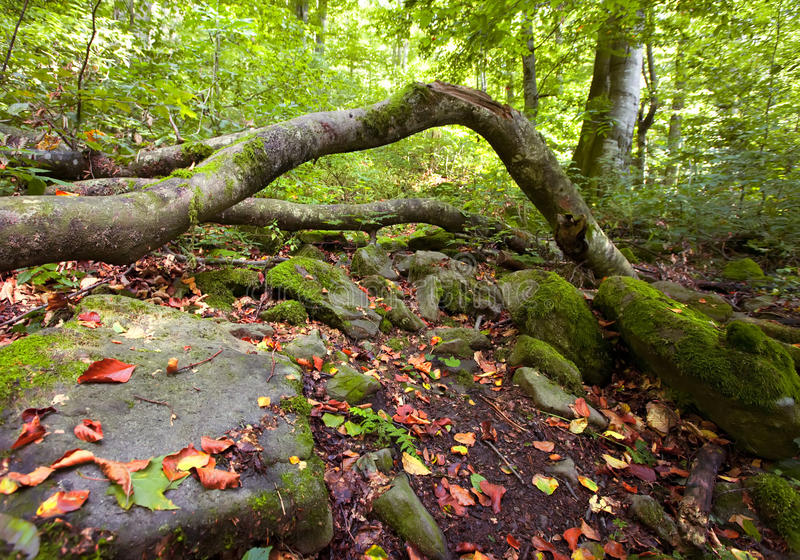 Paesaggio selvaggio verde della foresta della montagna di estate fotografia stock libera da diritti