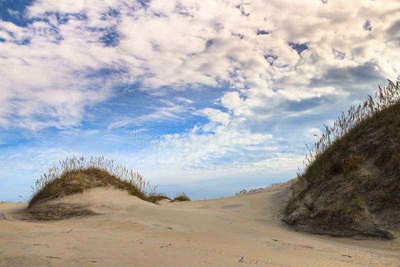 Paesaggio:  Sistema di ecologia della spiaggia immagini stock