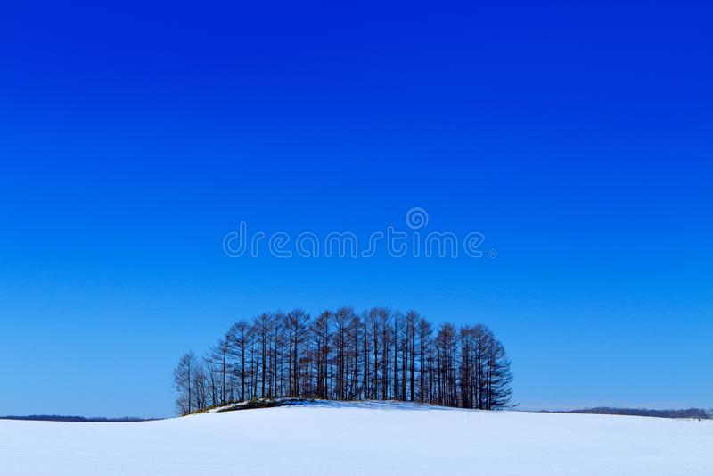 Paesaggio soleggiato di inverno con neve a e boschetto dell'albero sul prato Freddo del Giappone con cielo blu Campo bianco con l immagini stock