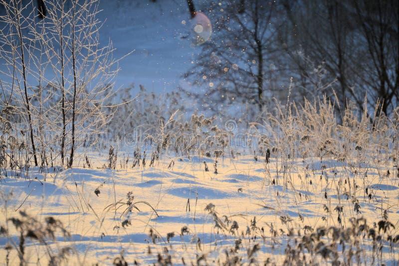 Paesaggio soleggiato di inverno di fiaba I fiocchi di neve emettono luce al sole Nuovo anno felice e Buon Natale fotografia stock libera da diritti