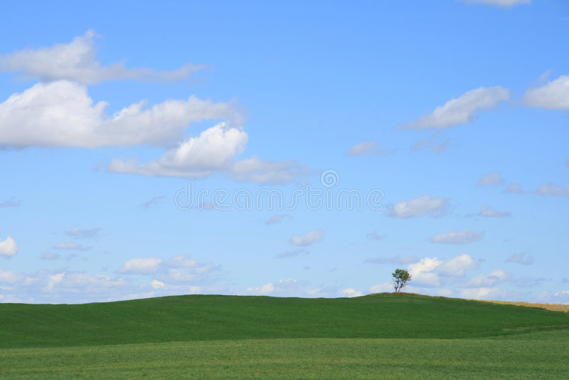 Paesaggio solo dell'albero immagine stock libera da diritti