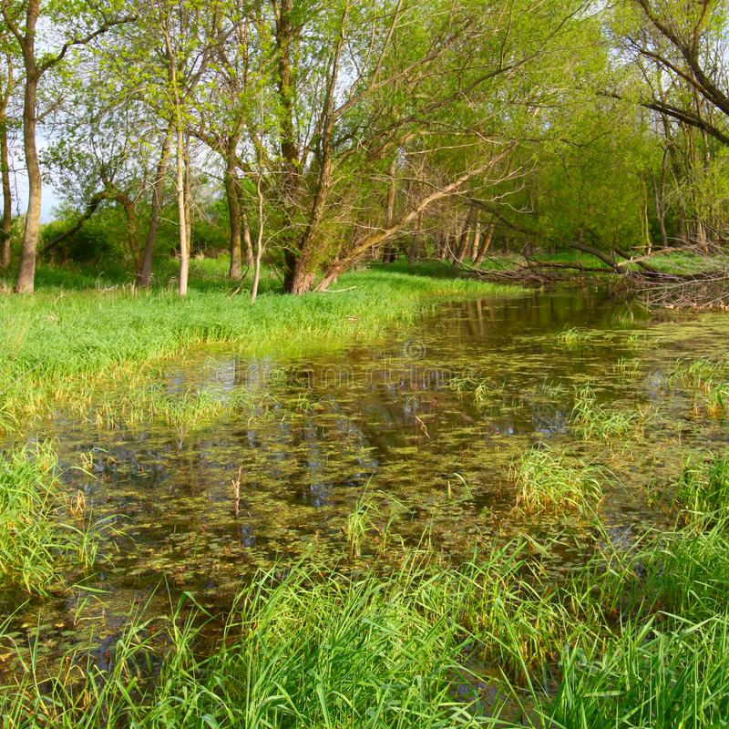 Paesaggio sommerso Illinois della zona umida fotografie stock