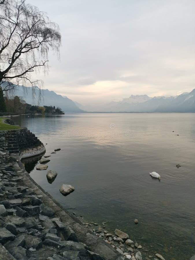 Paesaggio sopra il lago Lemano e le ammaccature du Midi con un cibo del cigno fotografie stock