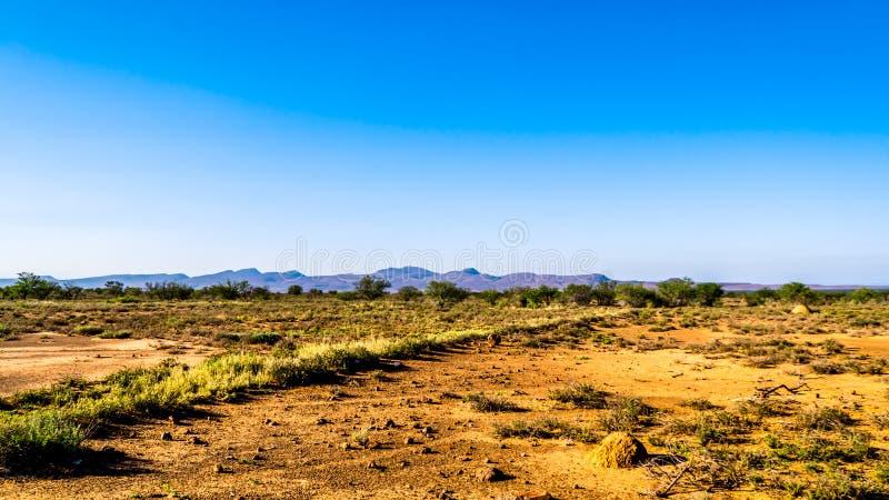 Paesaggio spalancato senza fine della regione di karoo del deserto dei semi nello stato e nella provincia del Capo Orientale libe immagine stock libera da diritti