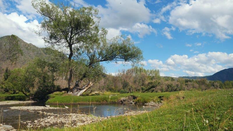 Paesaggio splendido con gli alberi delle montagne e un fiume fotografia stock libera da diritti