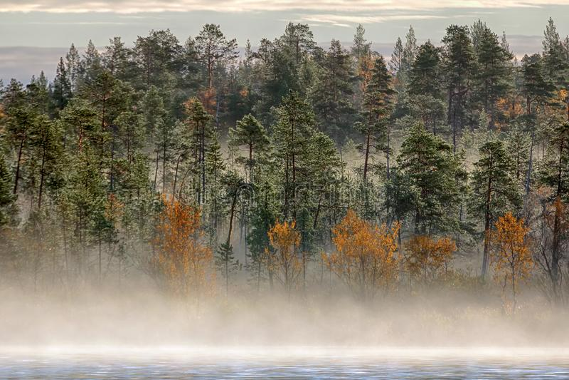 Paesaggio splendido di autunno con il fiume e la foresta nebbiosa fotografie stock