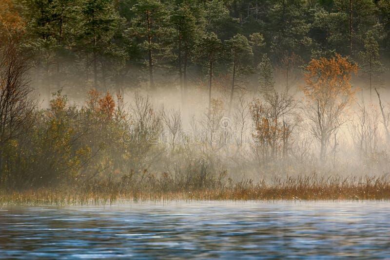 Paesaggio splendido di autunno con il fiume e la foresta nebbiosa fotografia stock