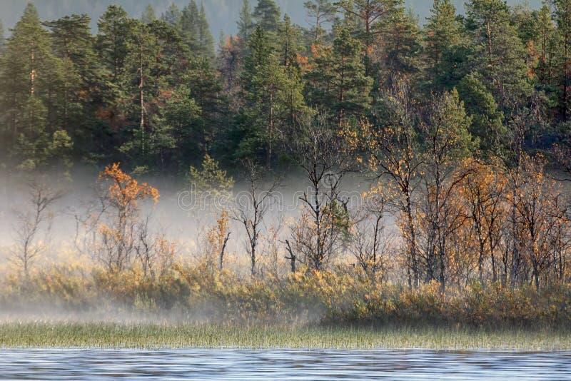 Paesaggio splendido di autunno con il fiume e la foresta nebbiosa immagini stock
