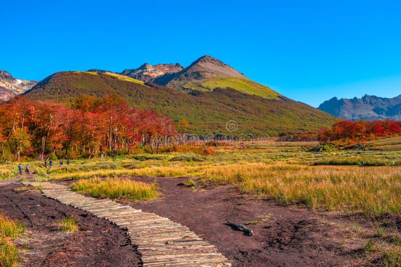 Paesaggio splendido di Patagonia& x27; s Tierra del Fuego National Park immagine stock libera da diritti