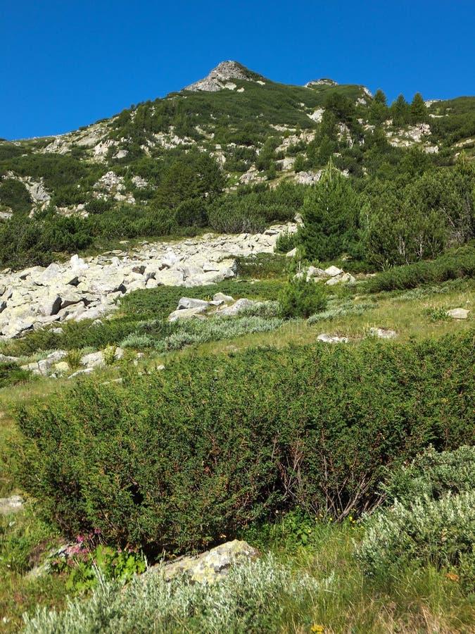 Download Paesaggio Stupefacente Con Il Picco Di Banderishki Chukar, Montagna Di Pirin Fotografia Stock - Immagine di riserva, riserve: 117981294