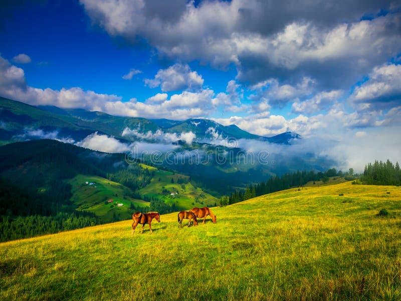 Paesaggio stupefacente della montagna fotografia stock