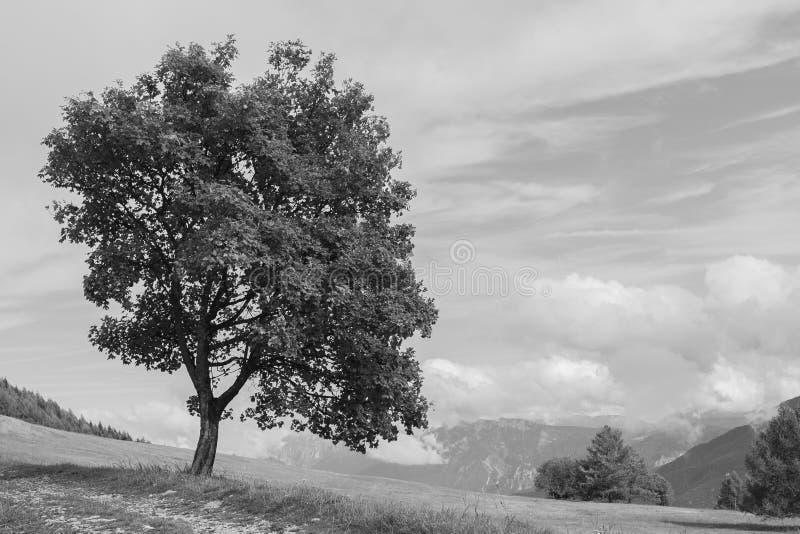 Paesaggio su Monte Bondone nel monocromio immagini stock