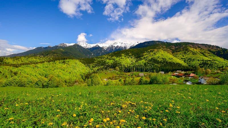 Paesaggio su tempo della montagna carpatica in primavera, Romania la Transilvania fotografia stock