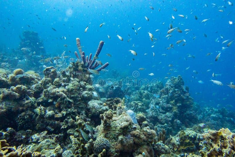 Paesaggio subacqueo ammucchiato con il pesce immagine stock