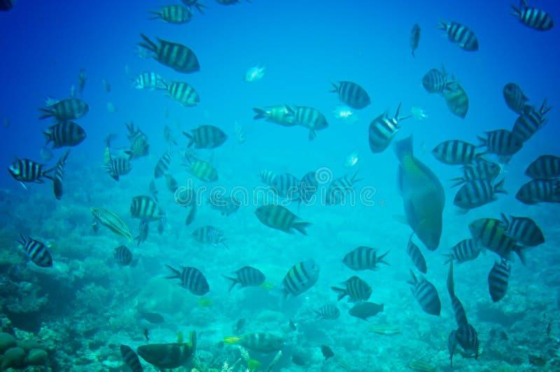 Paesaggio subacqueo del Mar Rosso. fotografia stock libera da diritti