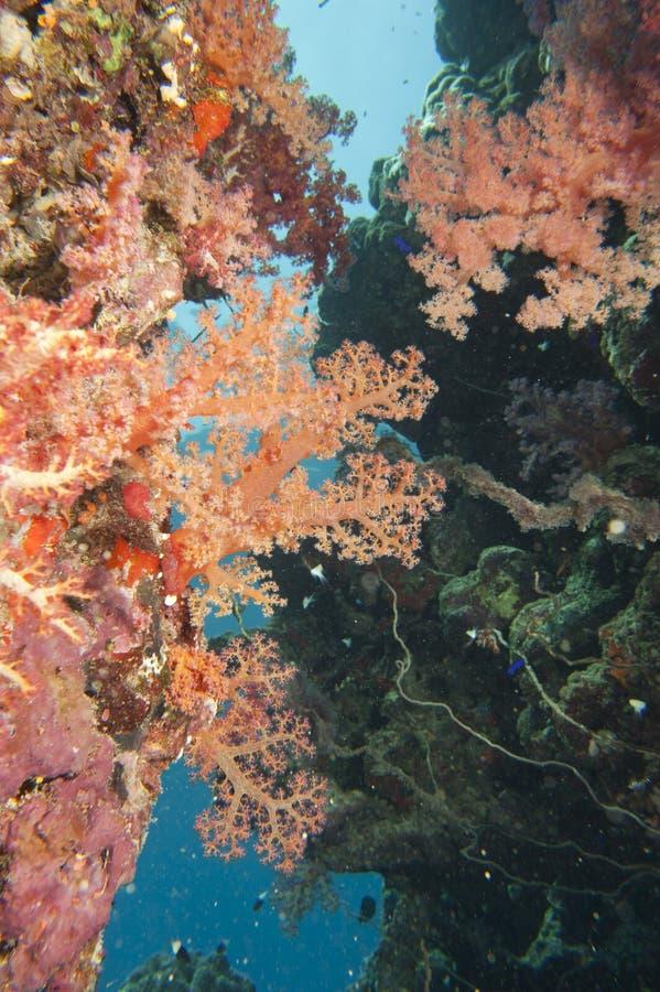 Paesaggio subacqueo del Mar Rosso immagine stock