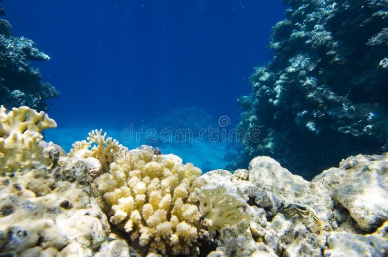 Paesaggio subacqueo del mare immagine stock