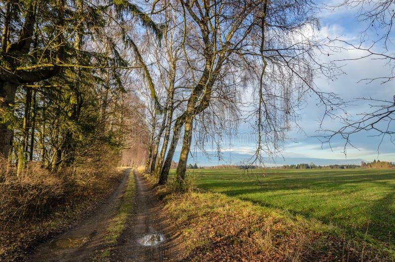Paesaggio tedesco con gli alberi di betulla accanto ad un percorso fotografie stock