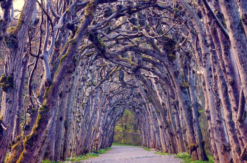 Paesaggio terrificante magico con un vicolo mistico, un arco degli alberi immagini stock libere da diritti