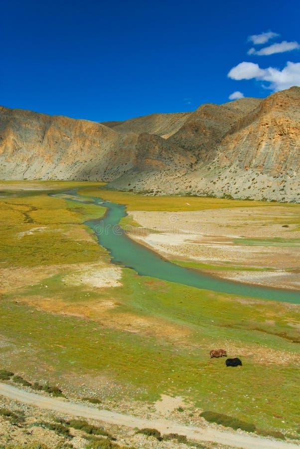 Paesaggio tibetano immagine stock libera da diritti