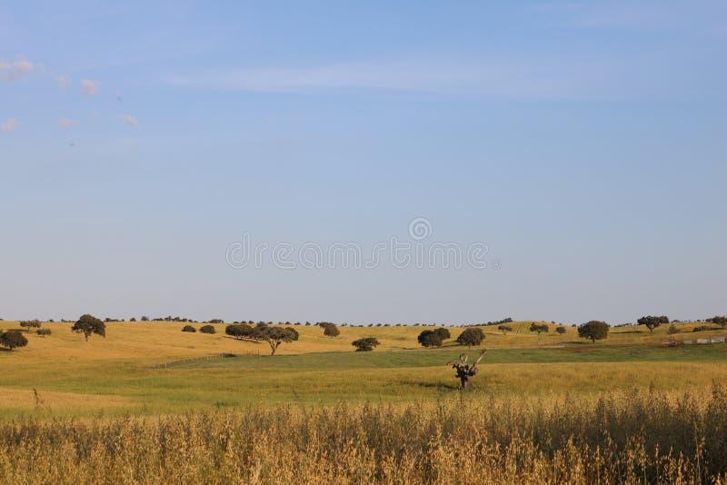 Paesaggio tipico dell'Alentejo immagine stock libera da diritti