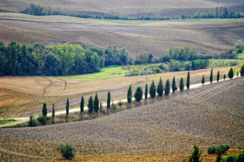 Paesaggio tipico in Toscana immagine stock libera da diritti