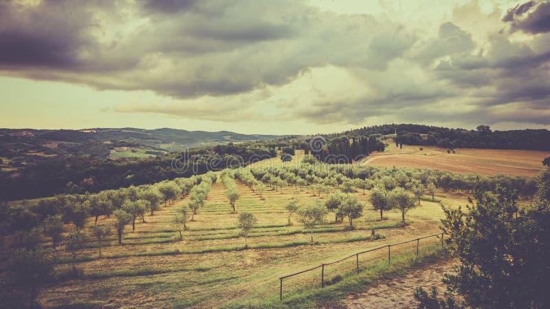 Paesaggio toscano d'annata fotografia stock