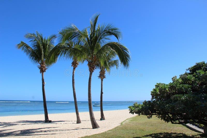 Paesaggio tropicale immagini stock libere da diritti