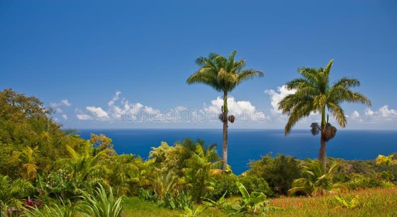 Paesaggio tropicale del Maui fotografie stock