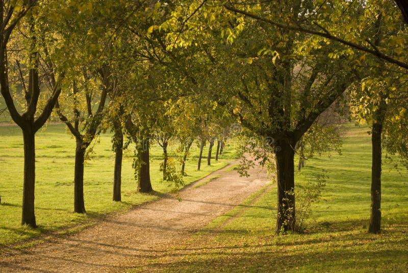 Paesaggio in un parco, Roma, Italia di caduta fotografia stock libera da diritti