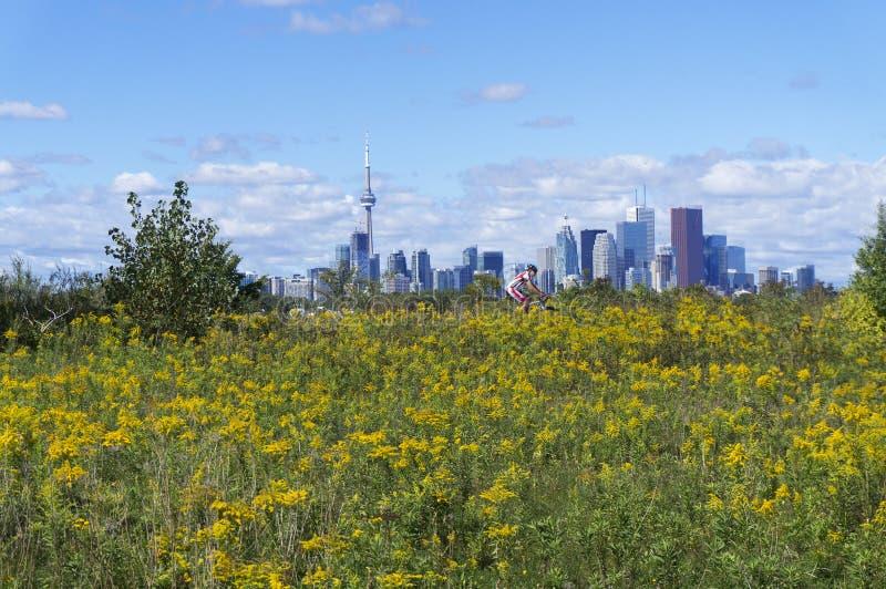 Paesaggio urbano dell'orizzonte di Toronto con il giacimento di fiore selvaggio giallo nella priorità alta immagini stock