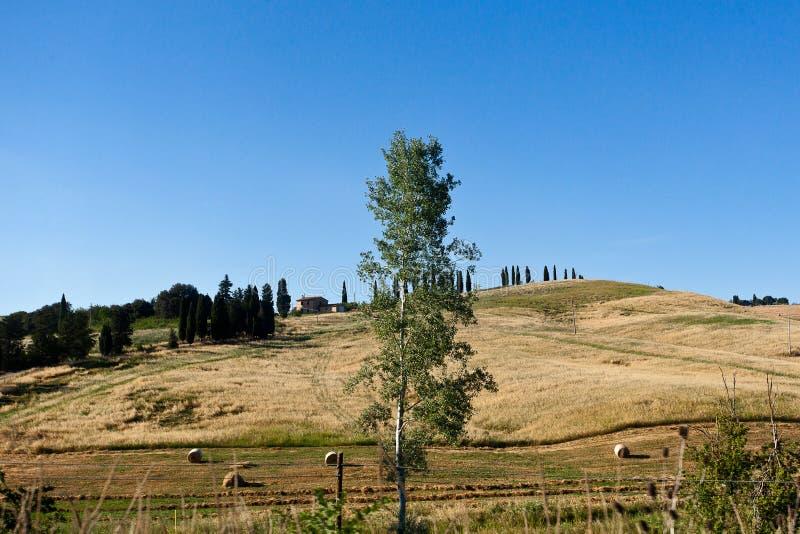 Paesaggio Val d'Orcia, raccolto di cereali, Toscana, Toscana, Italia, fotografie stock