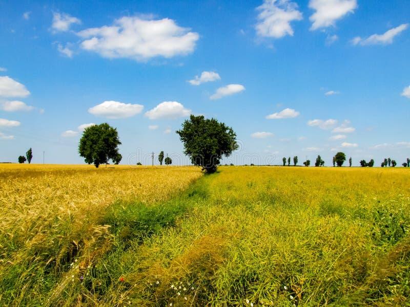 Paesaggio variopinto dei prati mazovian fotografia stock libera da diritti