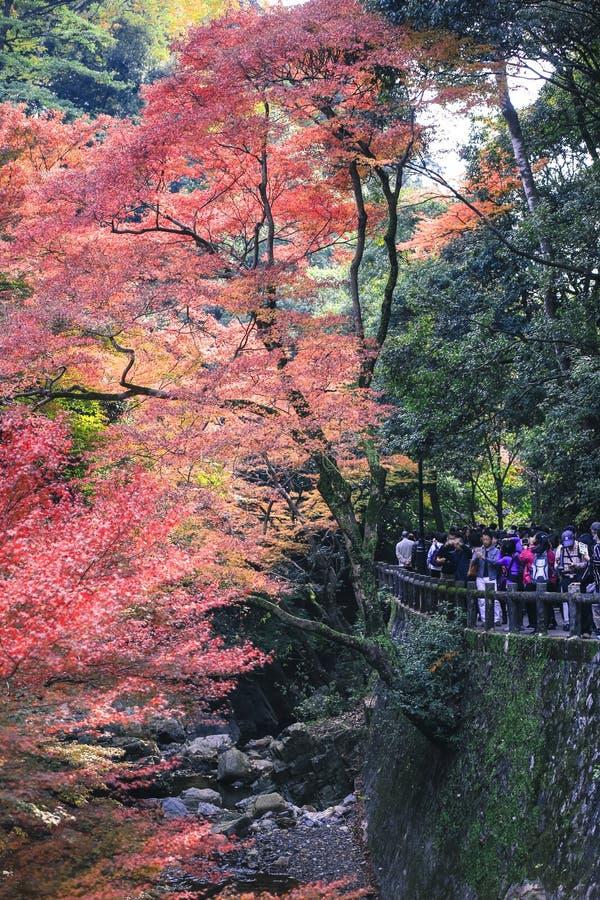 Paesaggio variopinto del paesaggio di stagione di viaggio di turismo di autunno delle foglie a Osaka e Kyoto Giappone fotografie stock