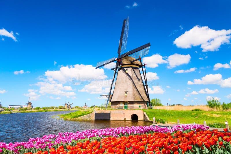 Paesaggio variopinto della molla nei Paesi Bassi, Europa Mulino a vento famoso nel villaggio di Kinderdijk con un'aiola dei fiori fotografia stock libera da diritti
