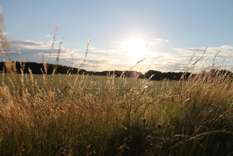 Paesaggio ventoso di estate della Svezia fotografia stock
